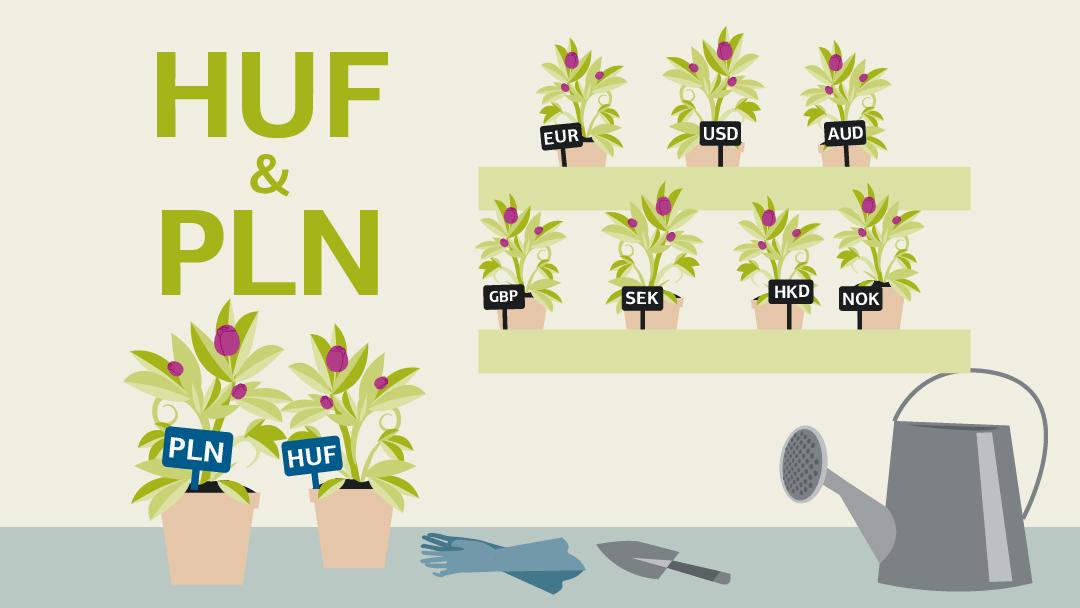 Illustration zum Thema HUF & PLN