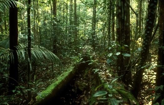 Die kfw unterst tzt den schutz des regenwaldes in for Boden im regenwald