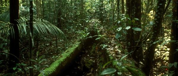 Ressort umwelt kfw stories for Boden im regenwald