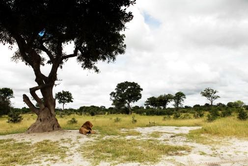 kaza ist afrikas gr tes naturschutzgebiet. Black Bedroom Furniture Sets. Home Design Ideas