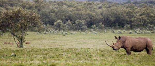WWF-Expertin über Nashornwilderei in Südafrika | KfW Stories